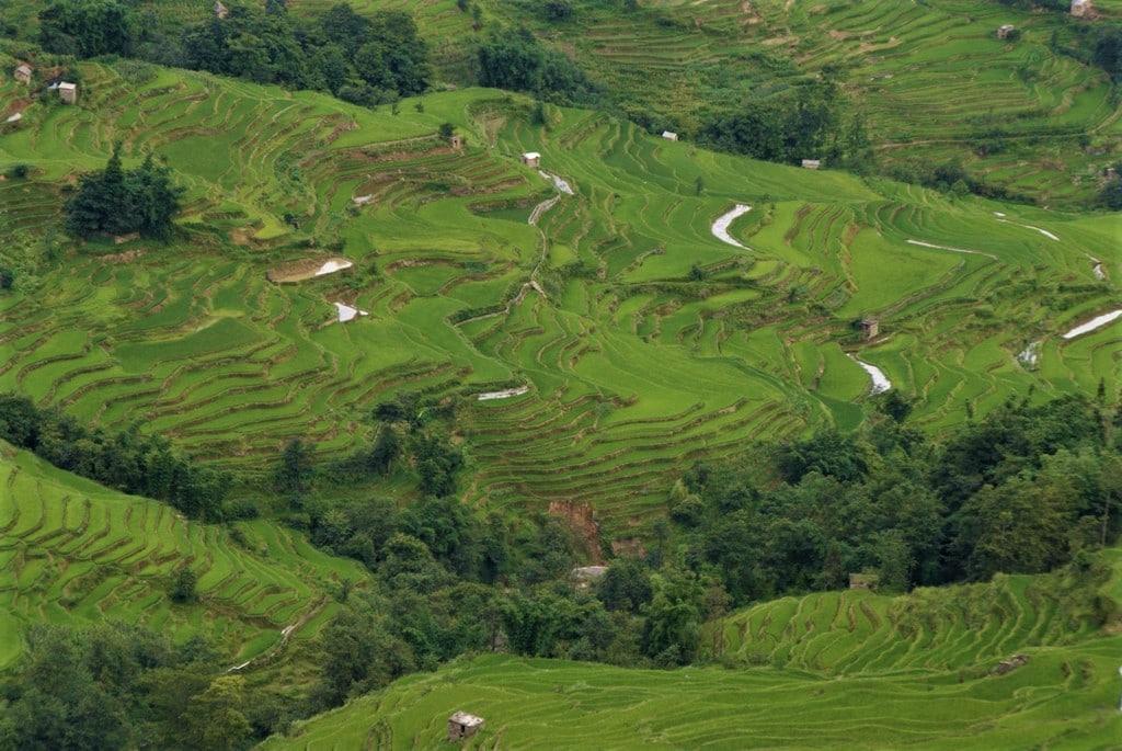 Les rizières en terrasses de Yuangyuang