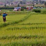Voyage riziculture