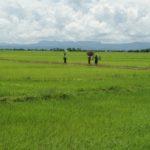 paysage de riziere