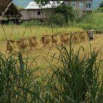 Aux alentours de Nyaung Shwe voyage en Birmanie