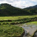 rizierres de Vieng thong Laos
