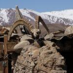 crane de mouton de Marco Polo