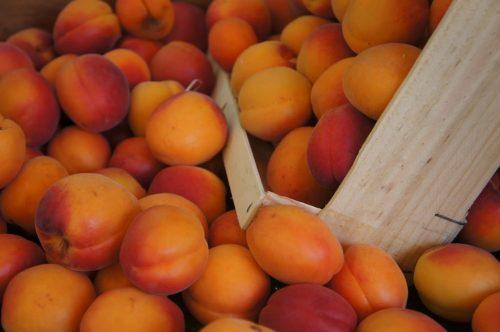 abricots , fruits